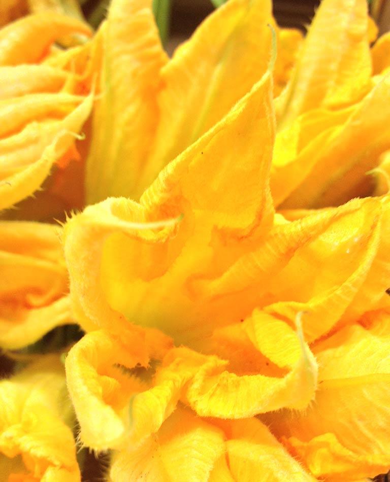 Zucchini-Blumen